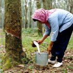 Come Viene Prodotto un Materasso in Lattice Naturale
